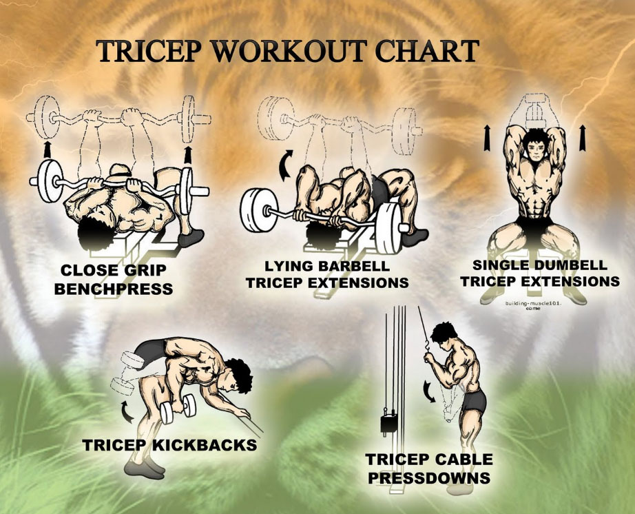 Tricep workout chart for GYM!