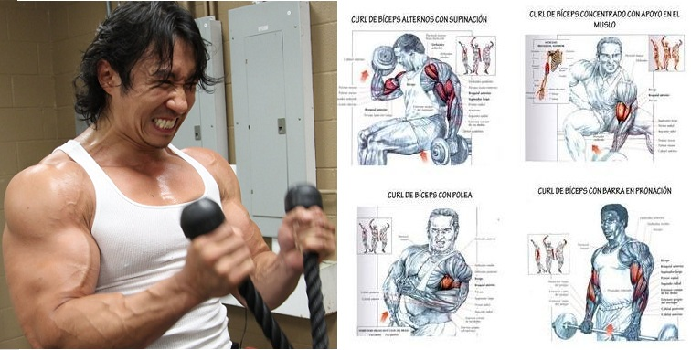 Best Bicep Workouts for Mass