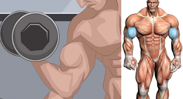 How to Increase Bicep Size and Build Big Biceps