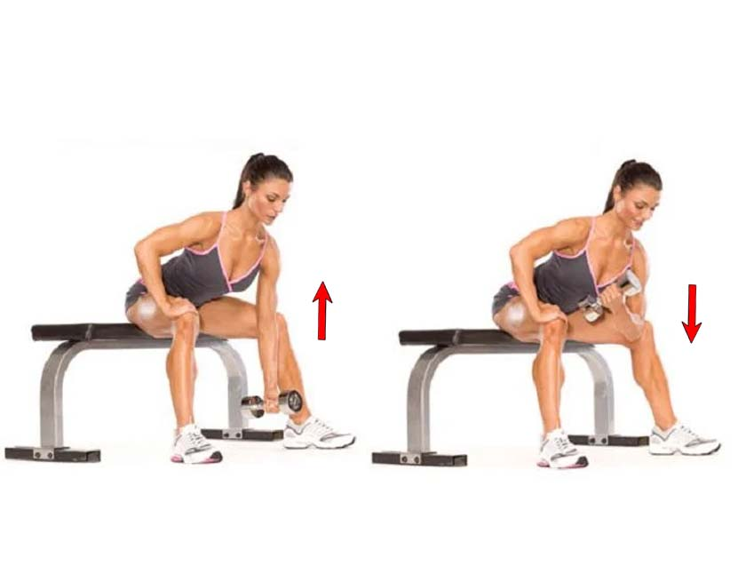 How to Do Concentration Biceps Curl
