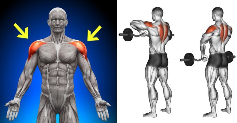 Ways To Shape And Form Your Shoulders
