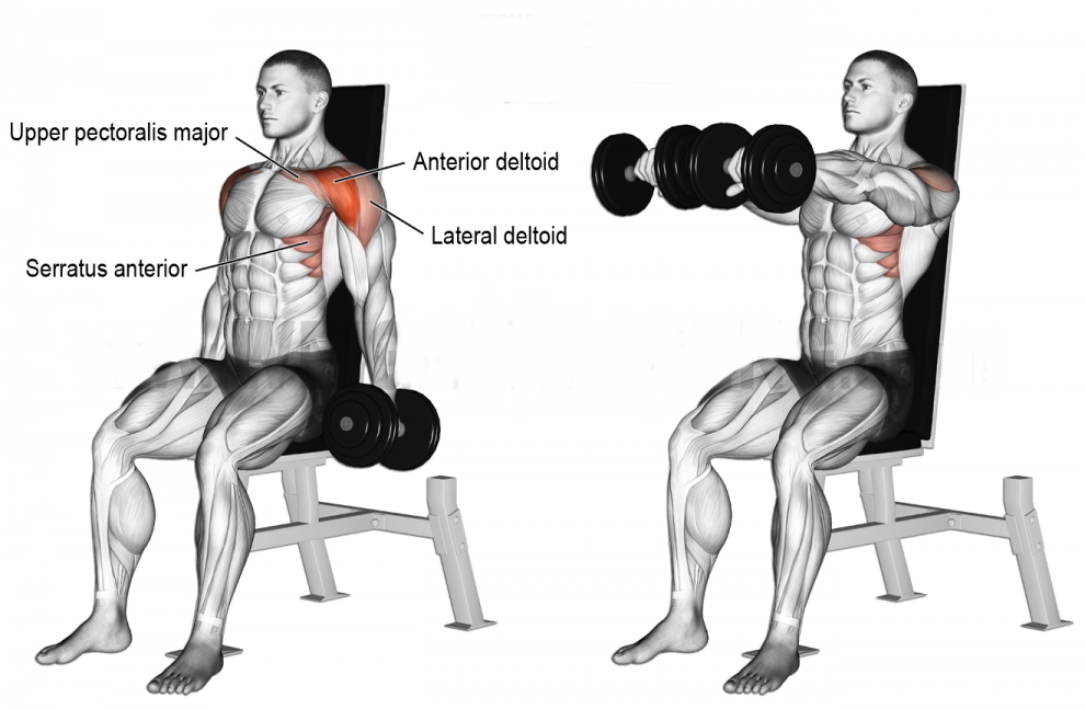 How to Seated dumbbell front raise