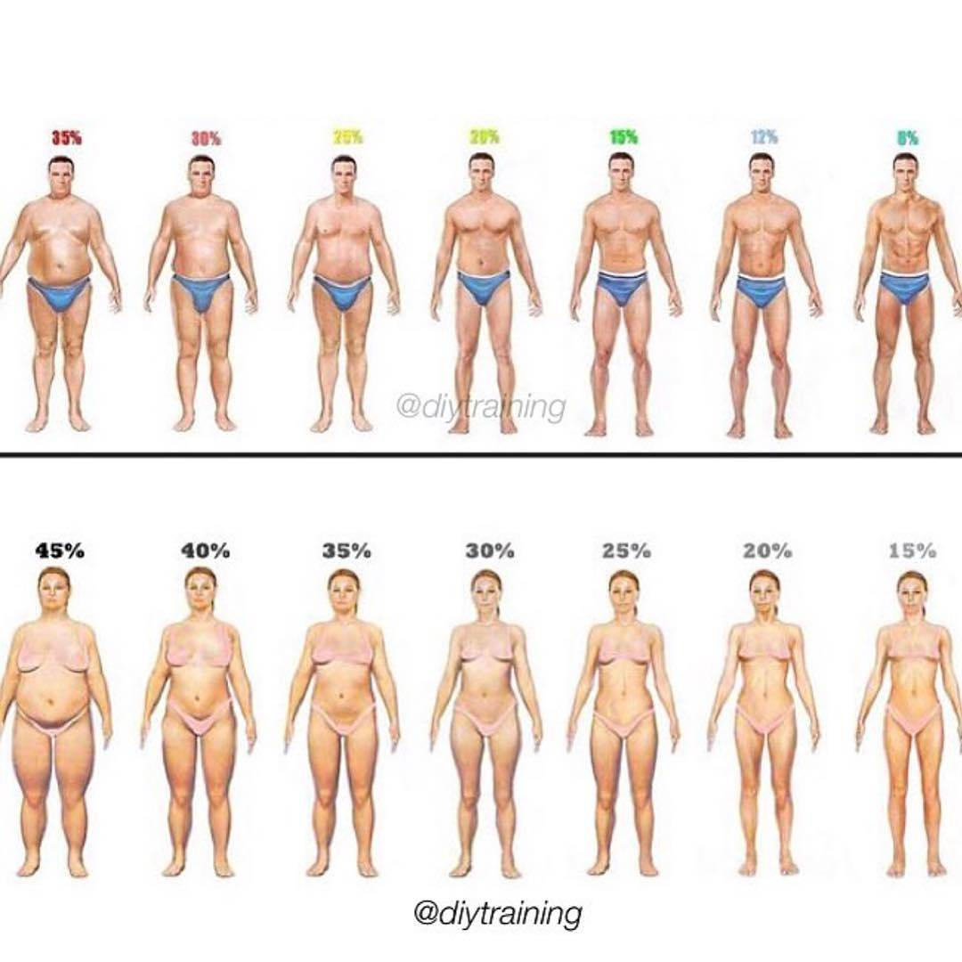 Body Fat Percent!