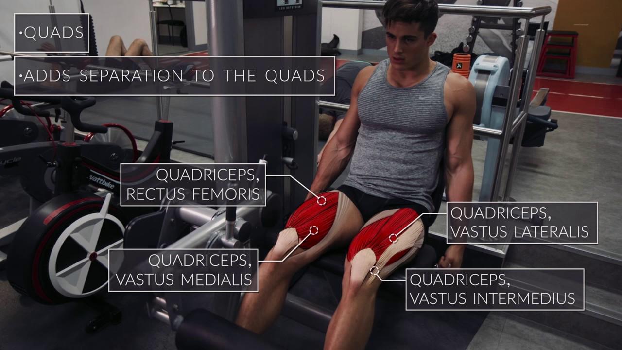 Exercise Anatomy Legs Workout