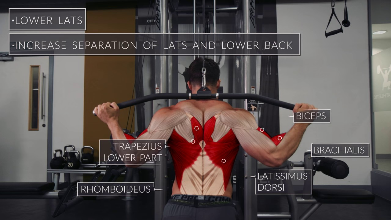 Exercise Anatomy Back Workout
