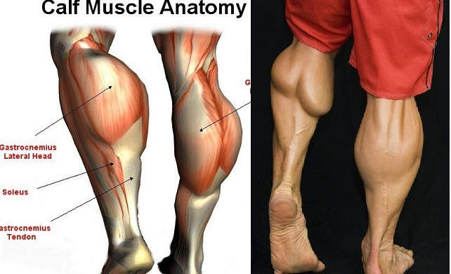 4 Best Calf Exercises To Get Diamond Shaped Calves
