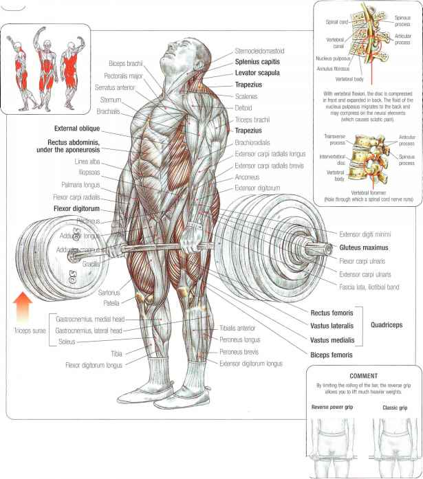 Structure Deadlift muscles