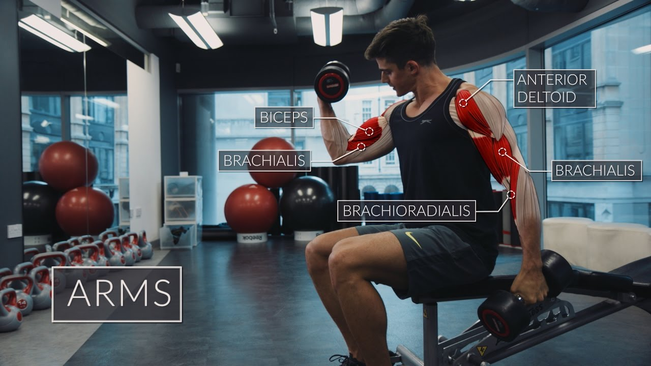 Exercise Anatomy: Arms Workout - weighteasyloss.com - Fitness ...