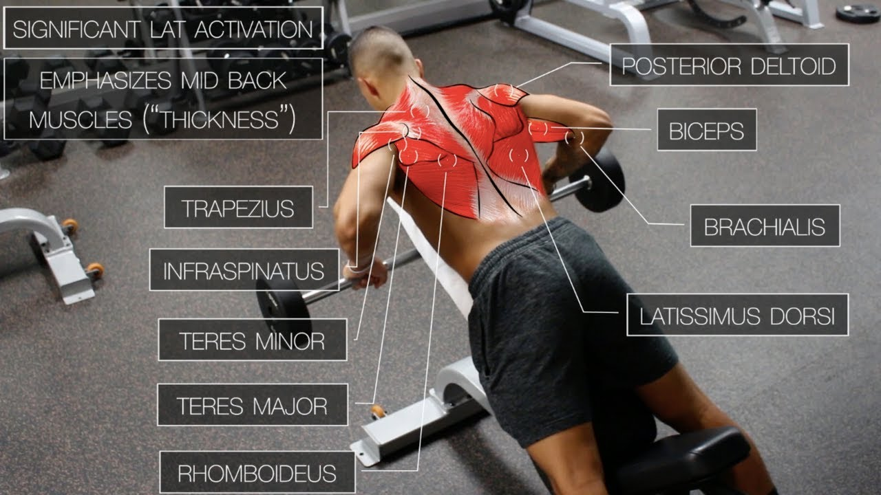 The Best Science-Based Back Workout
