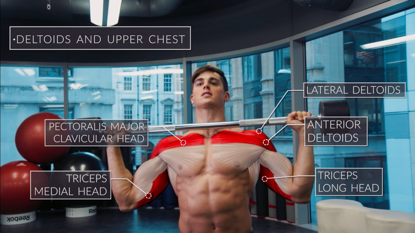 Exercise Anatomy: Shoulders Workout