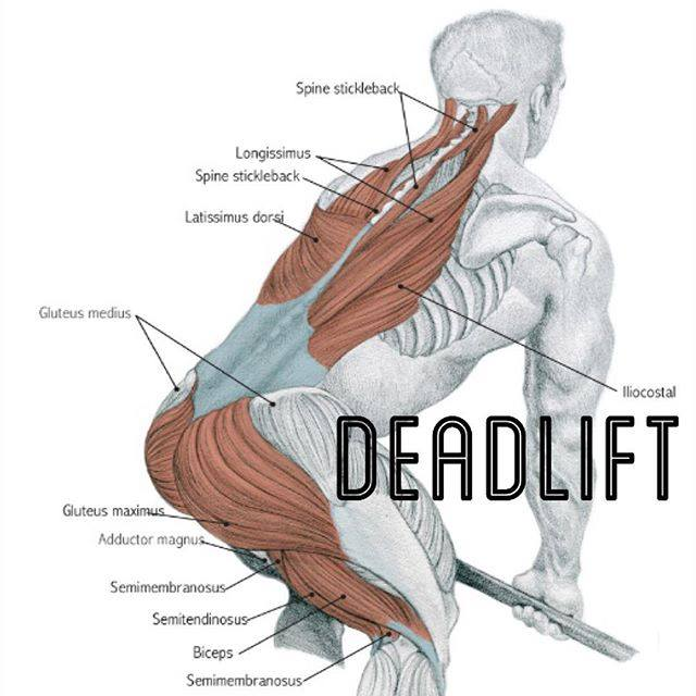 exercises deadlift