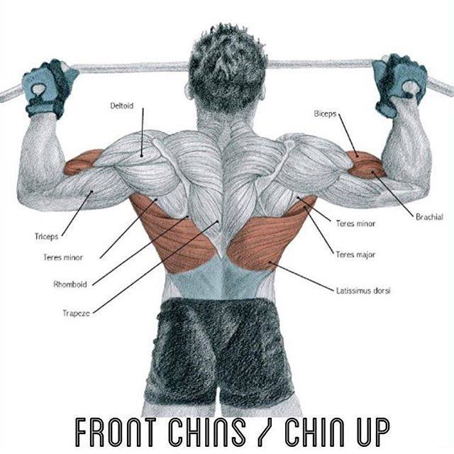 front chins /chin up