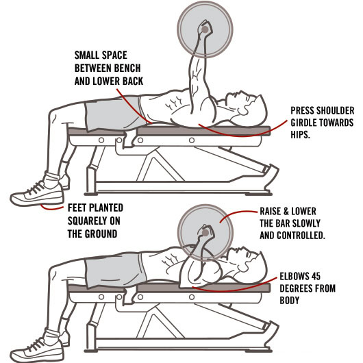 Сorrect exercises: barbell bench press