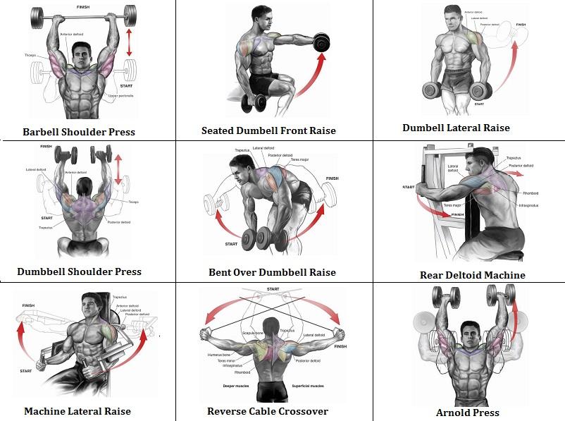 2 Shoulder Routines to Get the Best Shoulder Workout ...