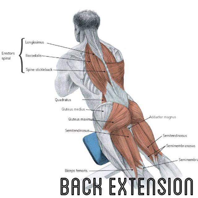 back extention
