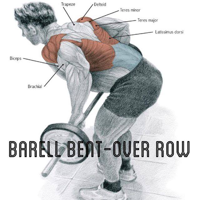 barell bent-over row