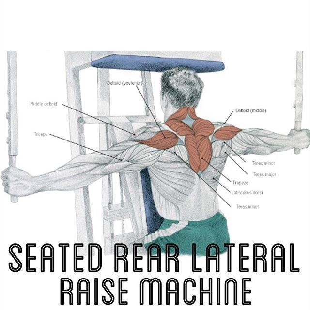 Seated rear lateral raise machine