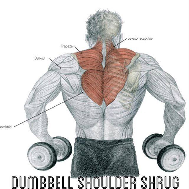 dumbell shoulder shrug