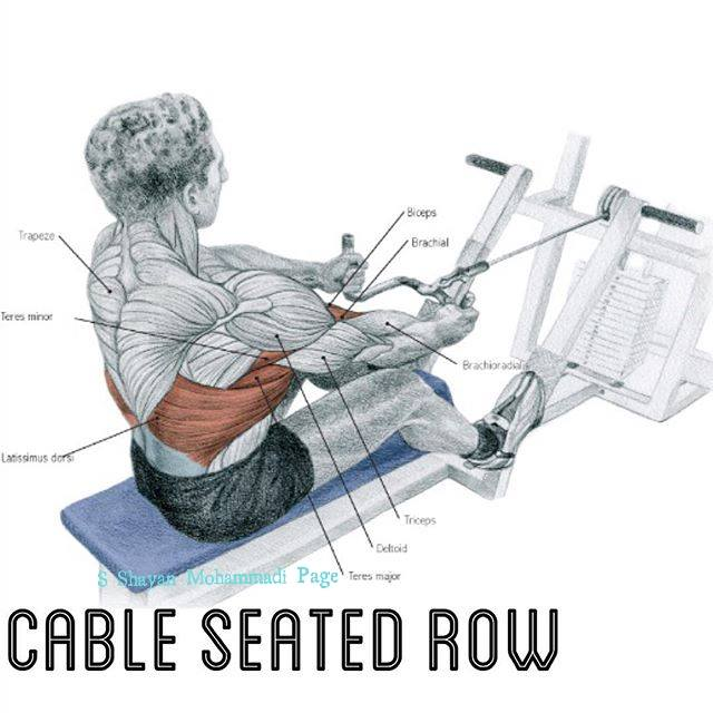 cable seated row