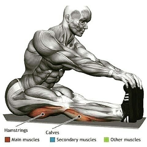 stretch of hamstrings