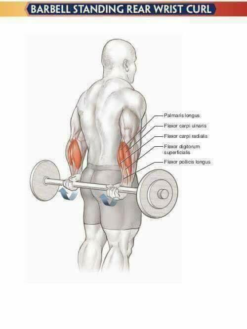 pump forearms with a position behind the back of the hand