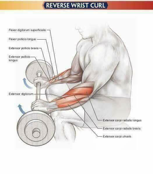 pump forearms in reverse grip