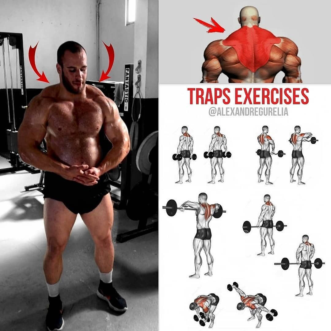 trapeze and back exercises