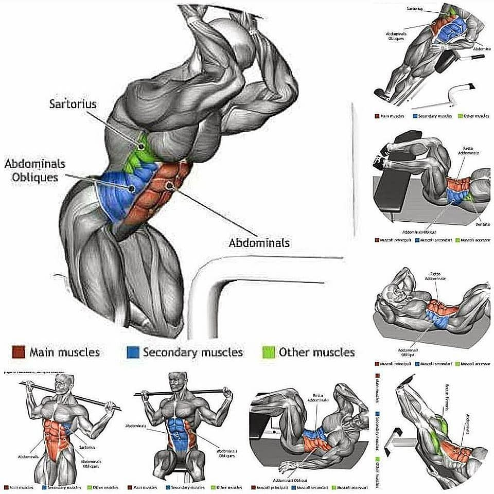 training of abdominal muscles