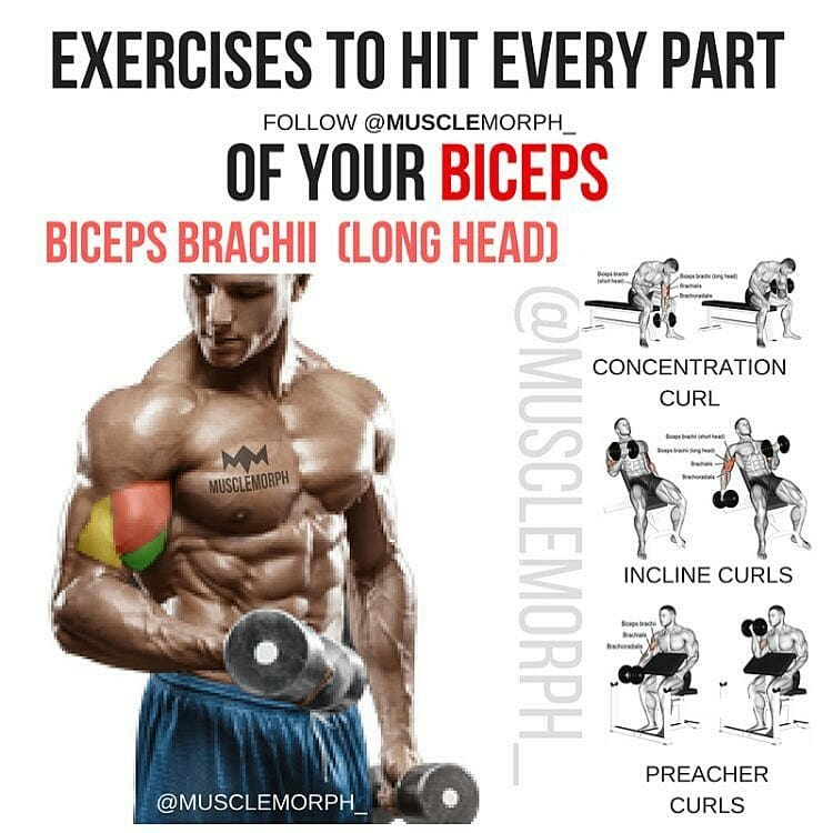 building bigger biceps