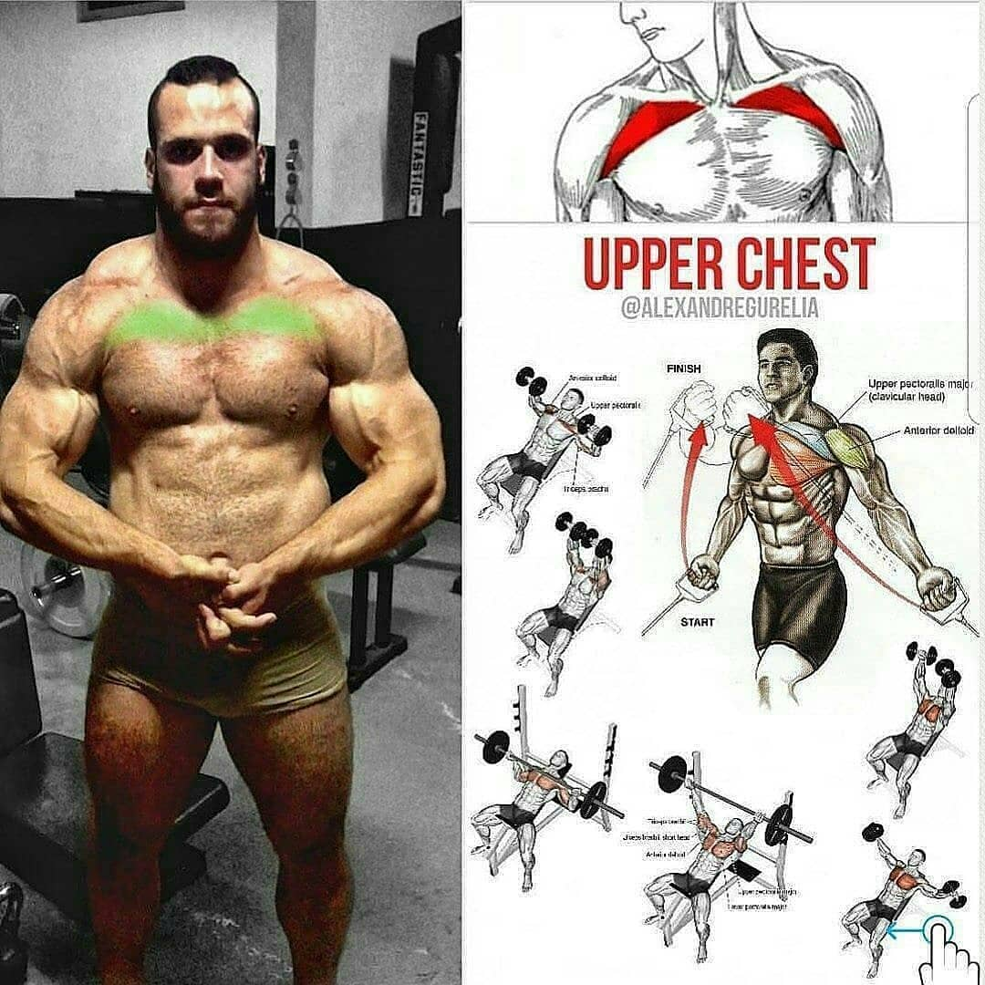 Exercises for every parte of the chest