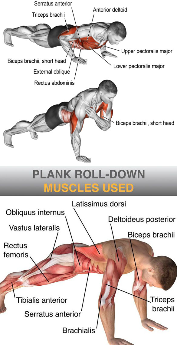 plank time gradually