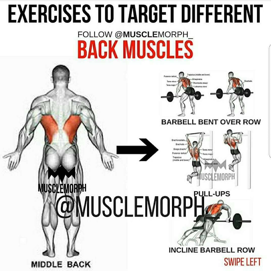 exercises to target Different: back muscles