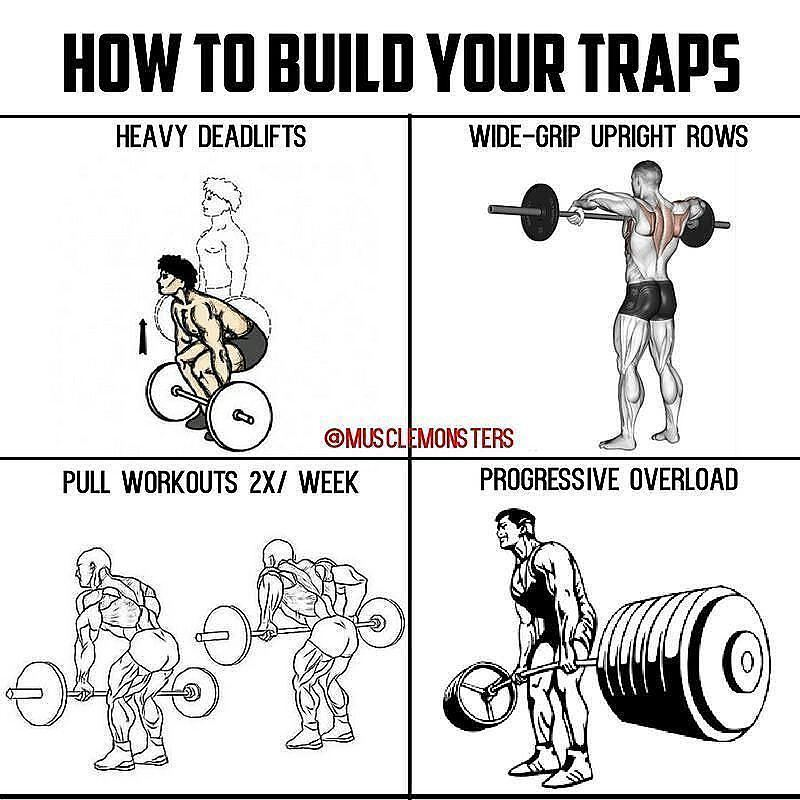 how to build your traps