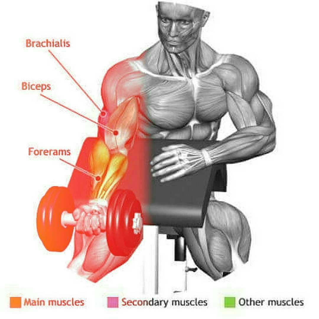 workout on your biceps