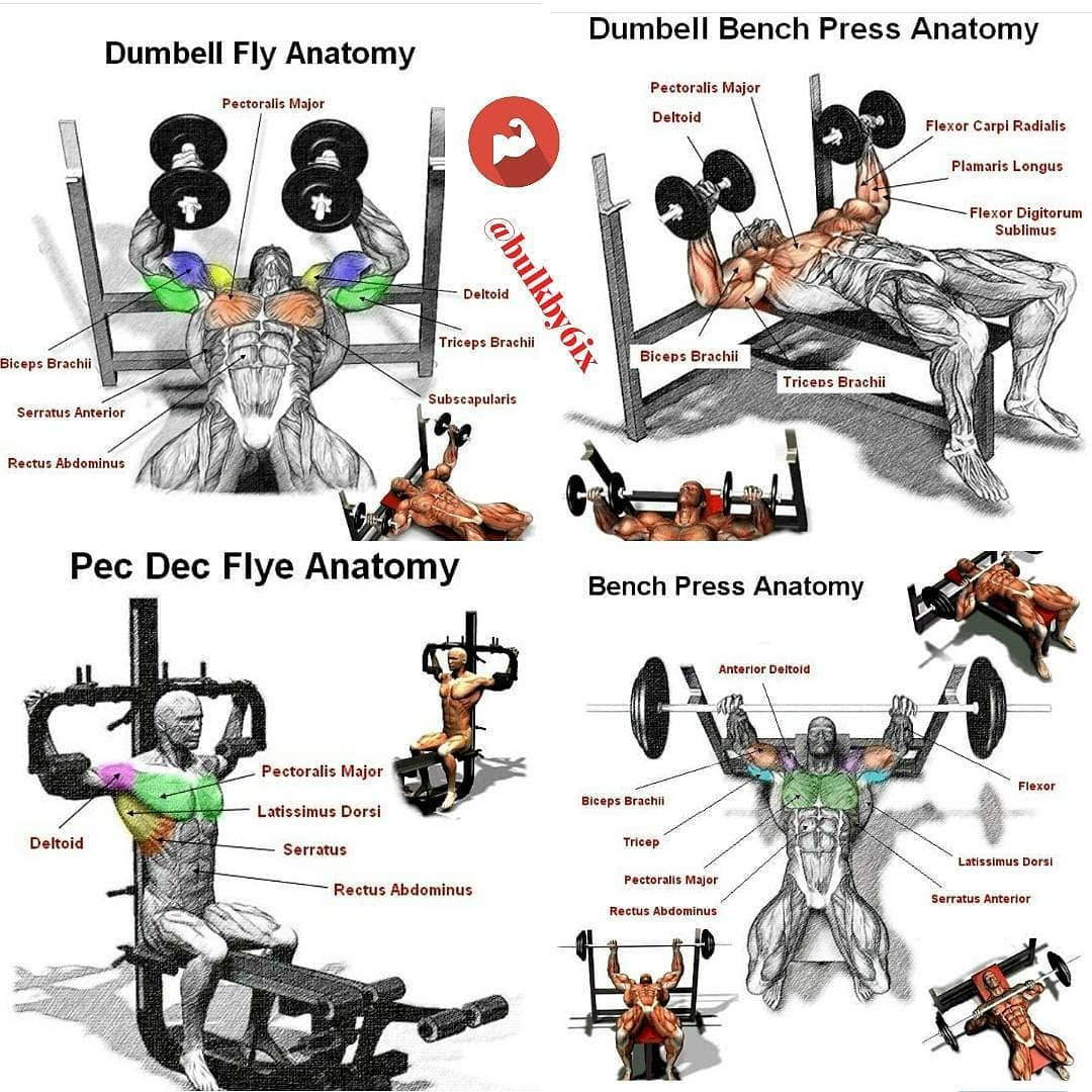 combination of exercises for chest