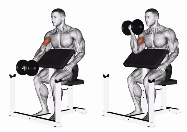 Dumbbell lifts