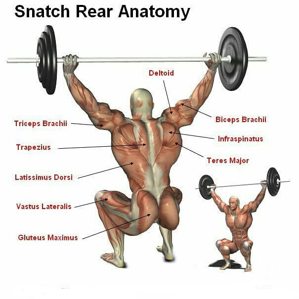 Snatch Real Anatomy