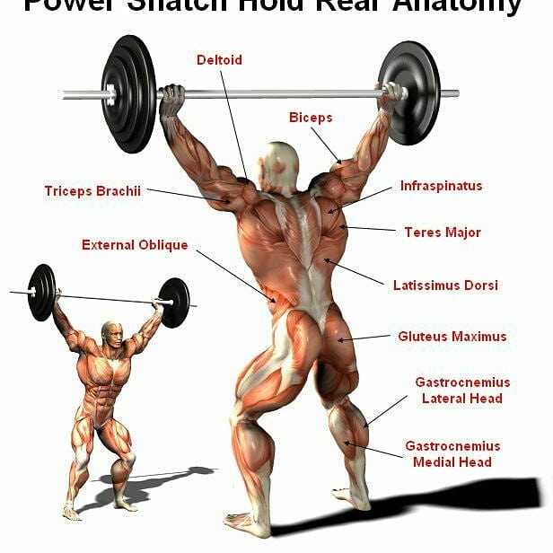 Power Snatch Real Anatomy