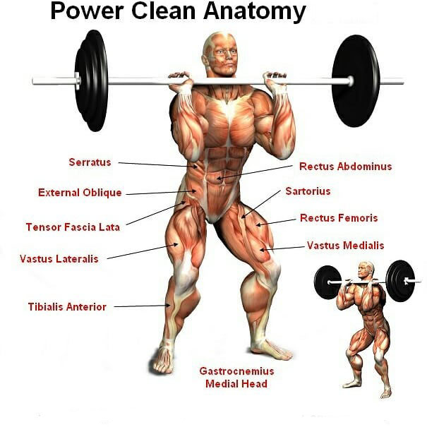 Power Clean Anatomy