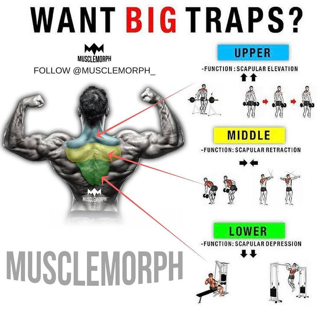 Want Big Traps