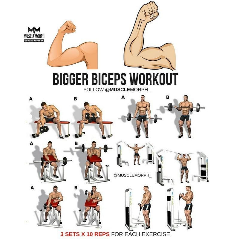 Bigger biceps workout