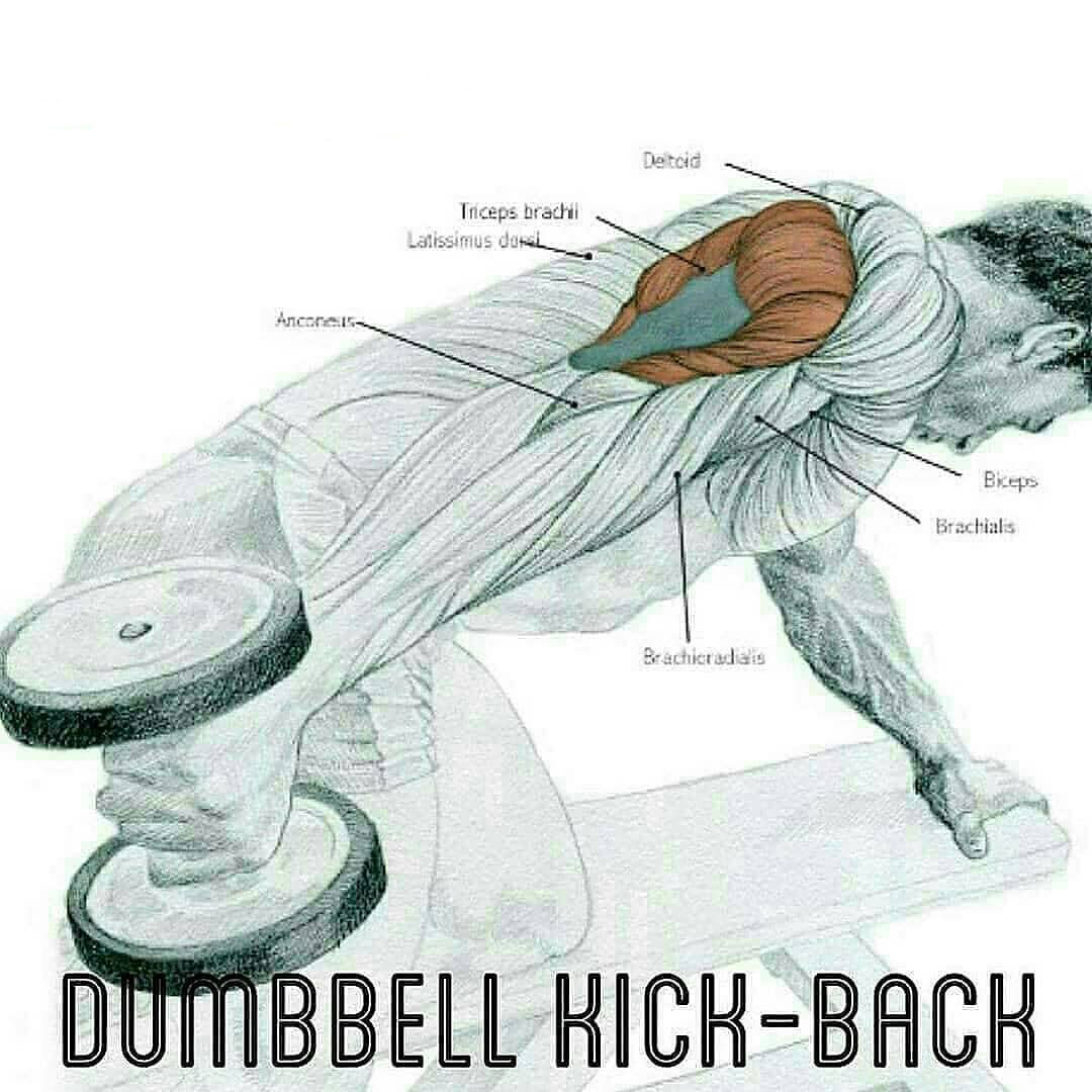 Dumbbell kick -back