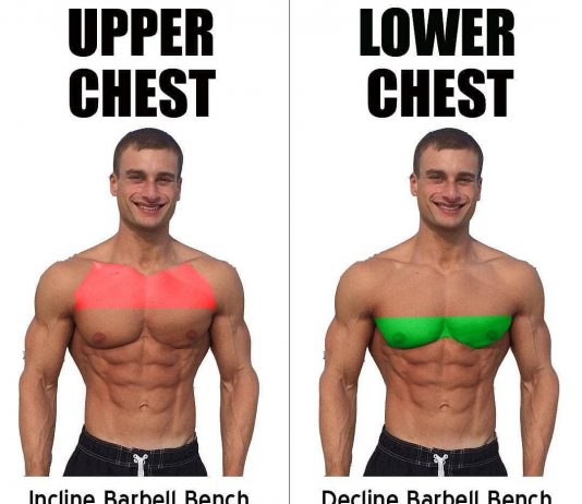 Upper Chest & Lower Chest