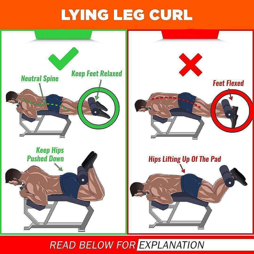 Lying leg curl and right leg curl