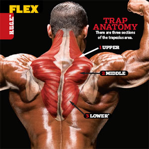Best Trap Workouts