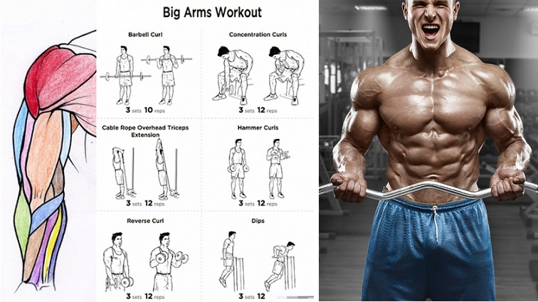 The-Best-Bicep-Workout-for-Arm-Size