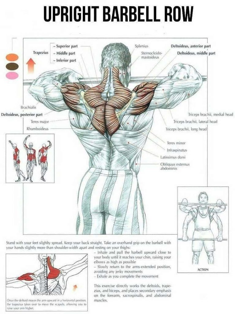 Works Muscles in Upright Row