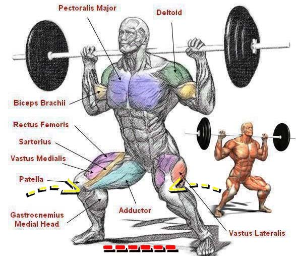 knees in squats with a barbell