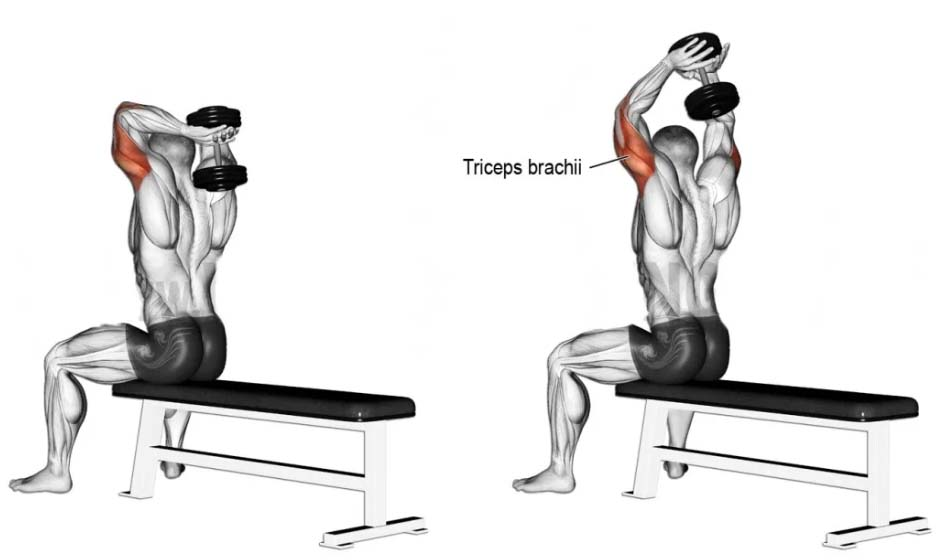 Recommendations Extension of Tricep Overhead