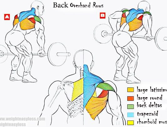 Overhand Rows consists of the following muscles